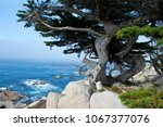 weathered pine on the pacific... | Shutterstock . vector #1067377076