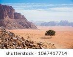 lonely tree in wadi ram desert. ... | Shutterstock . vector #1067417714