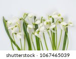 snowdrop isolated on white   Shutterstock . vector #1067465039