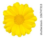 Beautiful Yellow Daisy Isolated ...