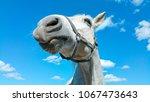 big white horse head portrait... | Shutterstock . vector #1067473643