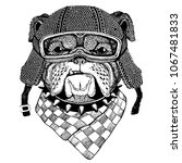 bulldog  dog with motorcycle... | Shutterstock .eps vector #1067481833