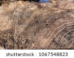 growth lines and textural... | Shutterstock . vector #1067548823