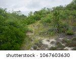 Dunes on Plum Island, Newburyport MA in the Parker River National Wildlife Refuge.