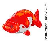 goldfish on a white background. | Shutterstock .eps vector #1067619674