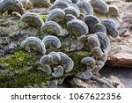 Unedged Mushrooms Growing On A...