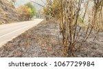 fire forest in summer  natural... | Shutterstock . vector #1067729984