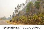 fire forest in summer  natural... | Shutterstock . vector #1067729990