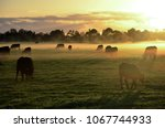 Rural landscape with herd of...