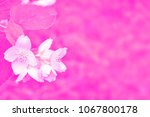 white jasmine. the branch... | Shutterstock . vector #1067800178
