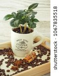 a coffee tree and coffee beans | Shutterstock . vector #1067835518