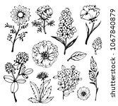 flowers  leaves  plants  herbs... | Shutterstock .eps vector #1067840879