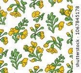 padauk flower  pterocarpus...   Shutterstock .eps vector #1067845178