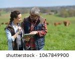 couple of stock breeders using... | Shutterstock . vector #1067849900