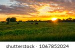 Cows Graze In A Farm Field At...