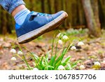 Small photo of Spring snowflake flowers Leucojum vernum blooming in sunset. Flower protected by law. Shoe treading on a flower in grass. Concept shoes ruthlessly tramples the living flower. Keep off the flowers