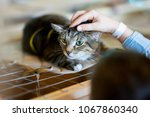 afraid homeless alone cat with... | Shutterstock . vector #1067860340