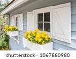 yellow pansies growing in a... | Shutterstock . vector #1067880980
