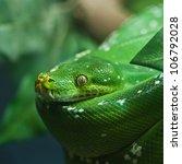 green snake | Shutterstock . vector #106792028