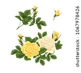 set of yellow and white roses ...   Shutterstock .eps vector #1067978426