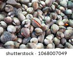 fresh cockles in fish market ... | Shutterstock . vector #1068007049