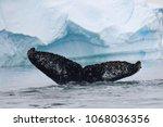 on a zodiac tour of iceberg... | Shutterstock . vector #1068036356