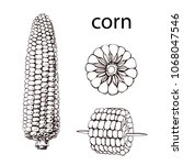corn  maize or zea mays ... | Shutterstock .eps vector #1068047546
