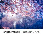 beautiful spring nature... | Shutterstock . vector #1068048776