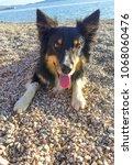 dog on the beach | Shutterstock . vector #1068060476