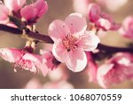 spring tree with pink flowers | Shutterstock . vector #1068070559