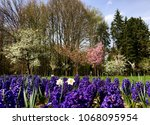 field of blooming flowers in... | Shutterstock . vector #1068095954