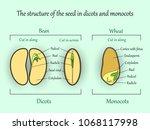 vector education botany banner  ... | Shutterstock .eps vector #1068117998