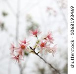 blossom in the morning | Shutterstock . vector #1068193469