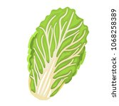 chinese cabbage. isolated... | Shutterstock .eps vector #1068258389