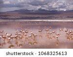 flamingos on the colorado... | Shutterstock . vector #1068325613