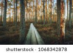 beautiful swamp and wooden... | Shutterstock . vector #1068342878