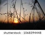 grass and evening sky. | Shutterstock . vector #1068394448