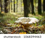 huge mushroom on a forest... | Shutterstock . vector #1068394463