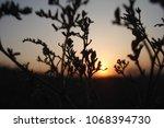 grass and evening sky. | Shutterstock . vector #1068394730
