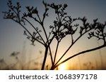 grass and sun  evening sky. | Shutterstock . vector #1068397178