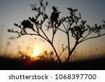 grass and sun  evening sky. | Shutterstock . vector #1068397700