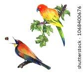 tropical bright birdies in... | Shutterstock . vector #1068400676