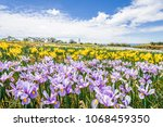 beautiful view to fields of... | Shutterstock . vector #1068459350