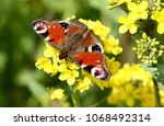 european common peacock...   Shutterstock . vector #1068492314