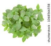 fresh thai basil herbs bouquet... | Shutterstock . vector #1068566558
