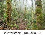 path running through misty...   Shutterstock . vector #1068580733
