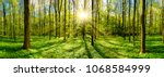 Beautiful Forest In Spring Wit...