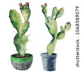 watercolor green cactuses in a... | Shutterstock . vector #1068589079