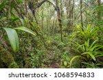 interior of mossy montane...   Shutterstock . vector #1068594833