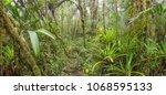 interior of mossy montane...   Shutterstock . vector #1068595133